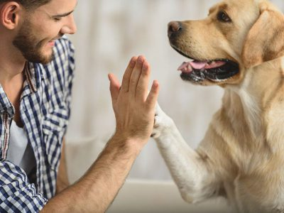 dog and human high five